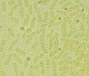 Bactéries vertes sulfureuses Chlorobi