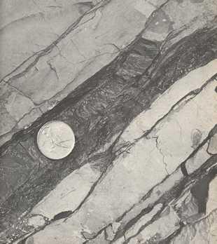 Couche d'iridium due à la chute d'une météorite 63 ma