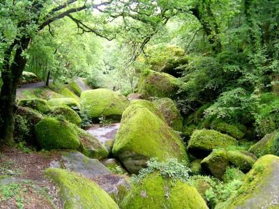 Ecosystème forêt (Huelgoat)