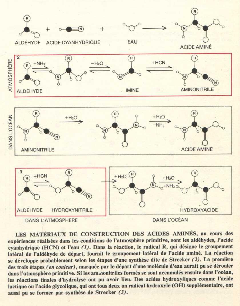 Evolution prébiotique acides aminés