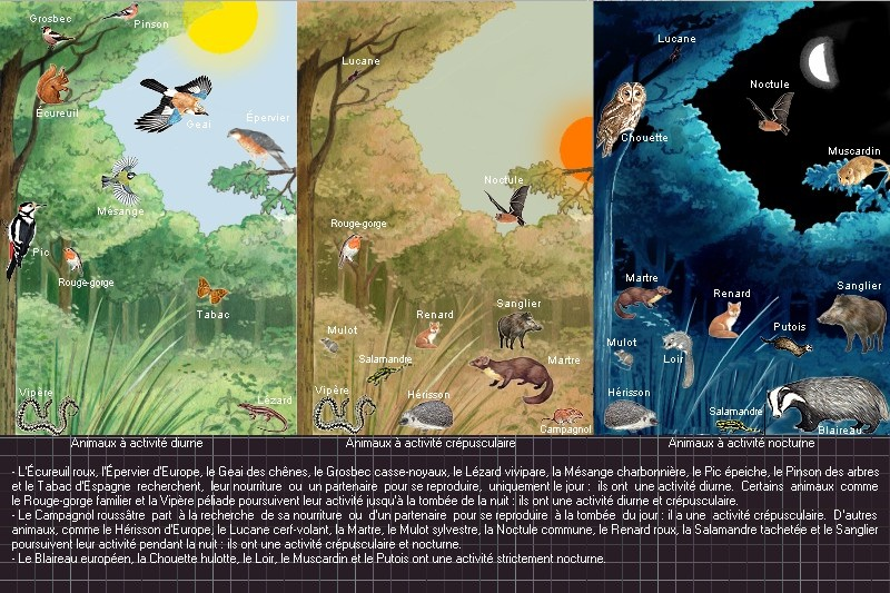 Niche écologique en forêt (dynamique)