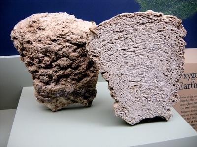 Stromatolithes précambriens (Montana)