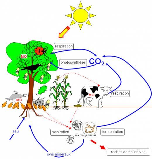 Cycle de la matière et flux énergétique
