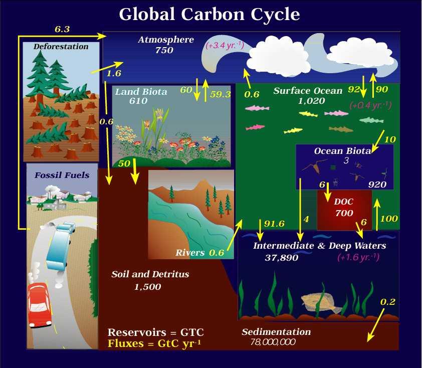 Cycle du carbone en chiffres