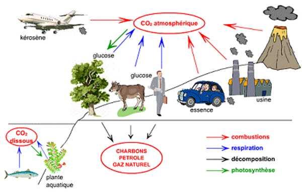 Cycle du carbone simplifié