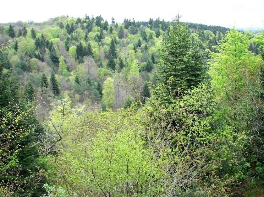 Forêt caducifoliée tempérée