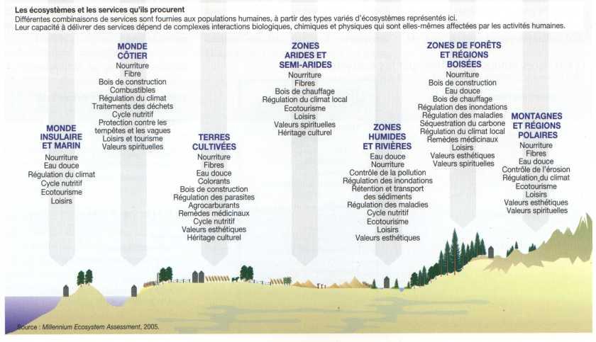 Les apports biomiques