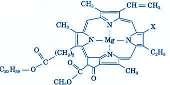 Molécule de chlorophylle
