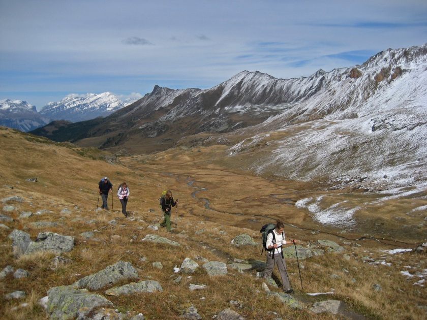 Pelouses alpines (Toundra)
