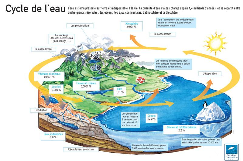 Cycle de l'eau et proportions