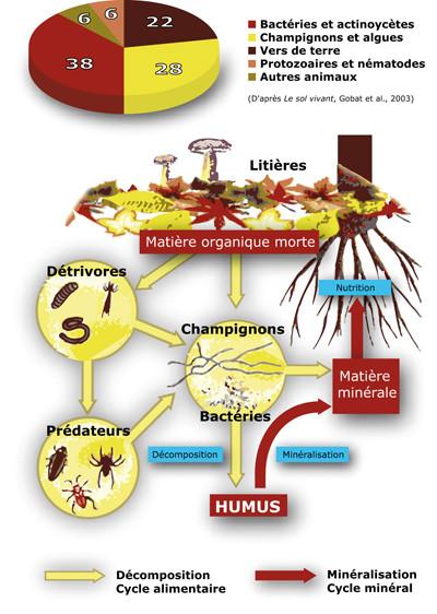 Comme on peut accrocher le microorganisme végétal des pieds