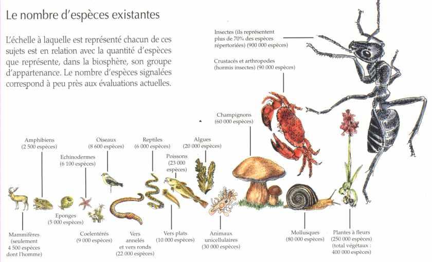 La biodiversit la maison d 39 alzaz ou le blog de l 39 cologie - Maison de l ecologie ...