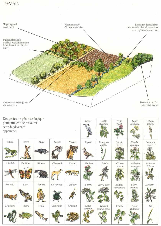 R paration de l cosyst me simplifi la maison d 39 alzaz ou le blog de l 39 cologie - Maison de l ecologie ...
