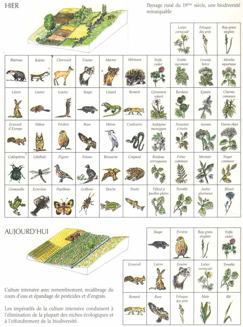 Simplification d un agrosyst me la maison d 39 alzaz ou le blog de l 39 cologie - Maison de l ecologie ...