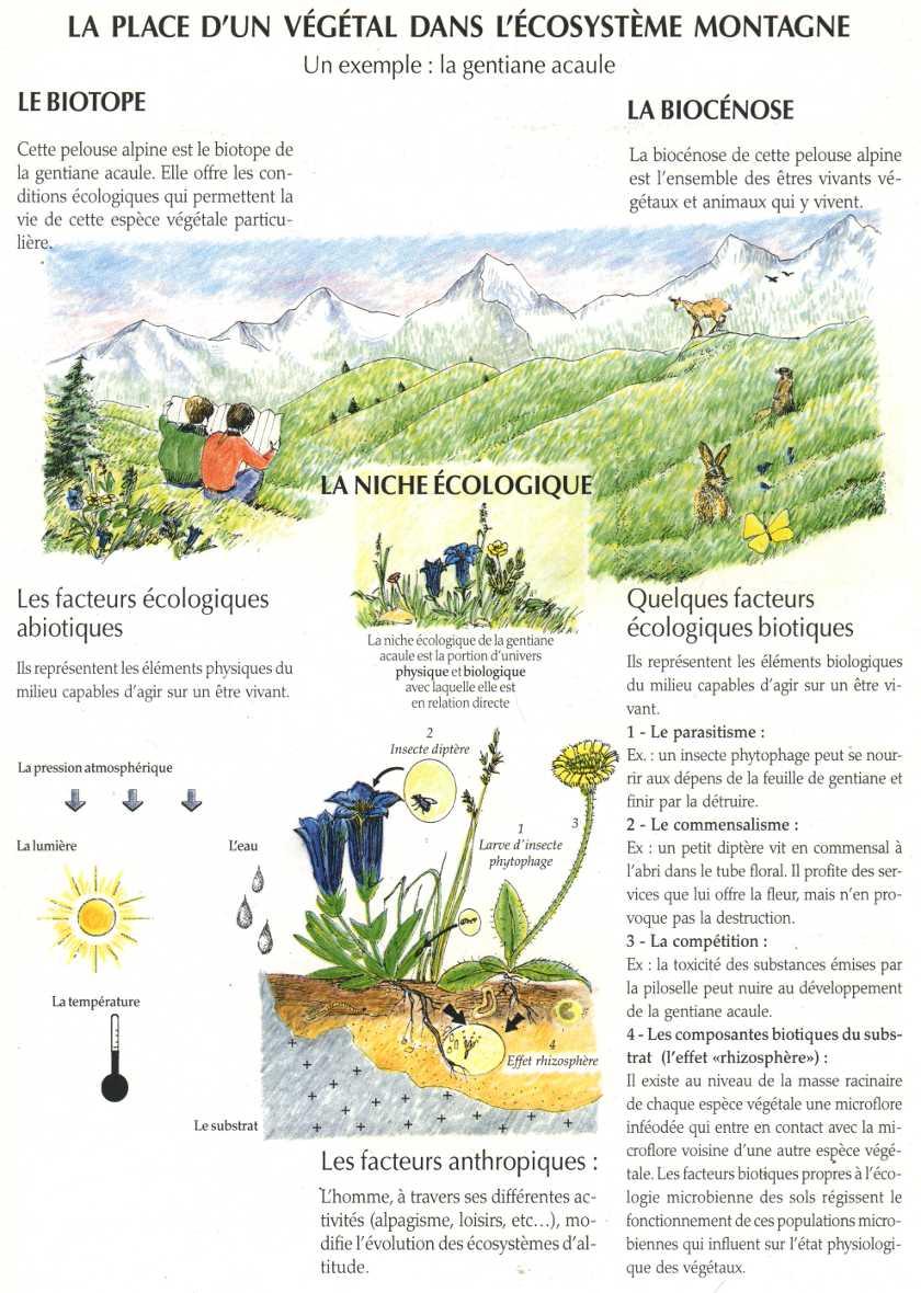 Facteurs cologiques gentiane acaule et cosyst me montagne la maison d 39 alzaz ou le blog de l - Maison de l ecologie ...