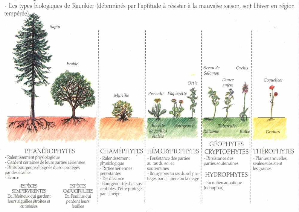 Echelle de rankier la maison d 39 alzaz ou le blog de l 39 cologie - Maison de l ecologie ...