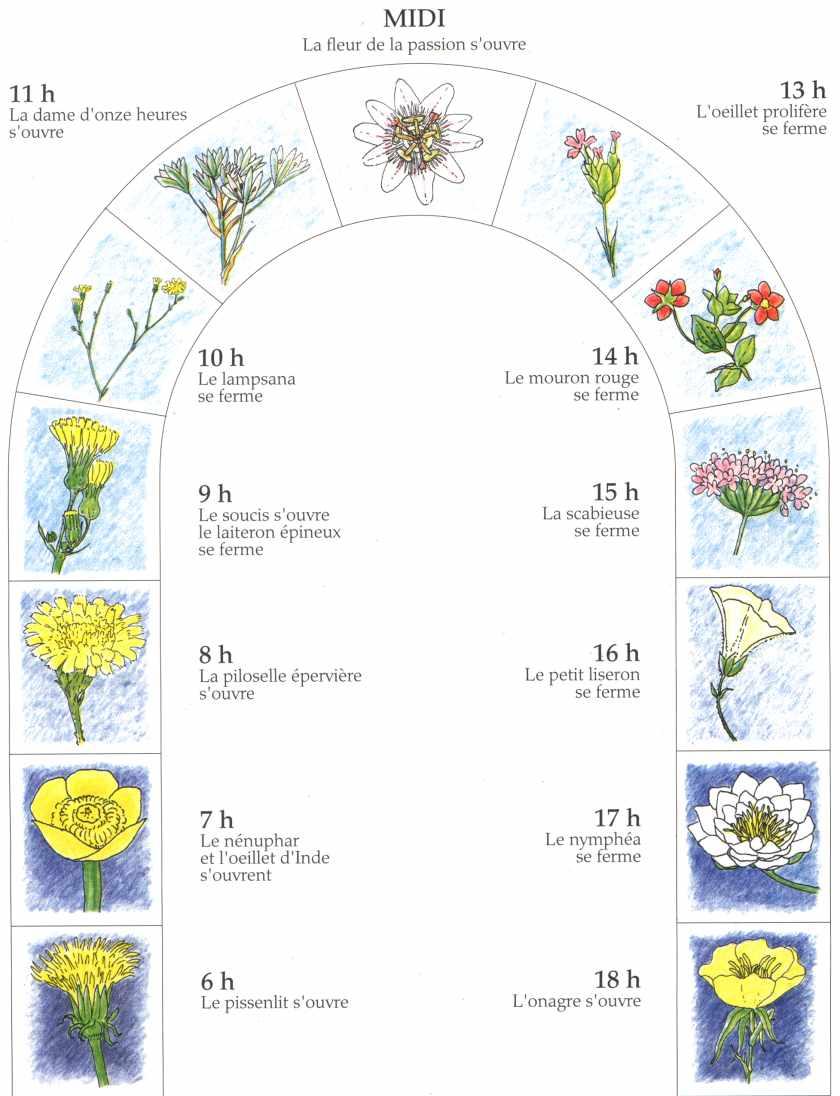 Horloge des fleurs la maison d 39 alzaz ou le blog de l - Maison de l ecologie ...
