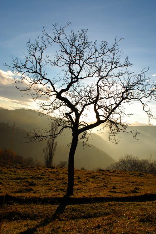 Phan rophyte caduque la maison d 39 alzaz ou le blog de l - Maison de l ecologie ...