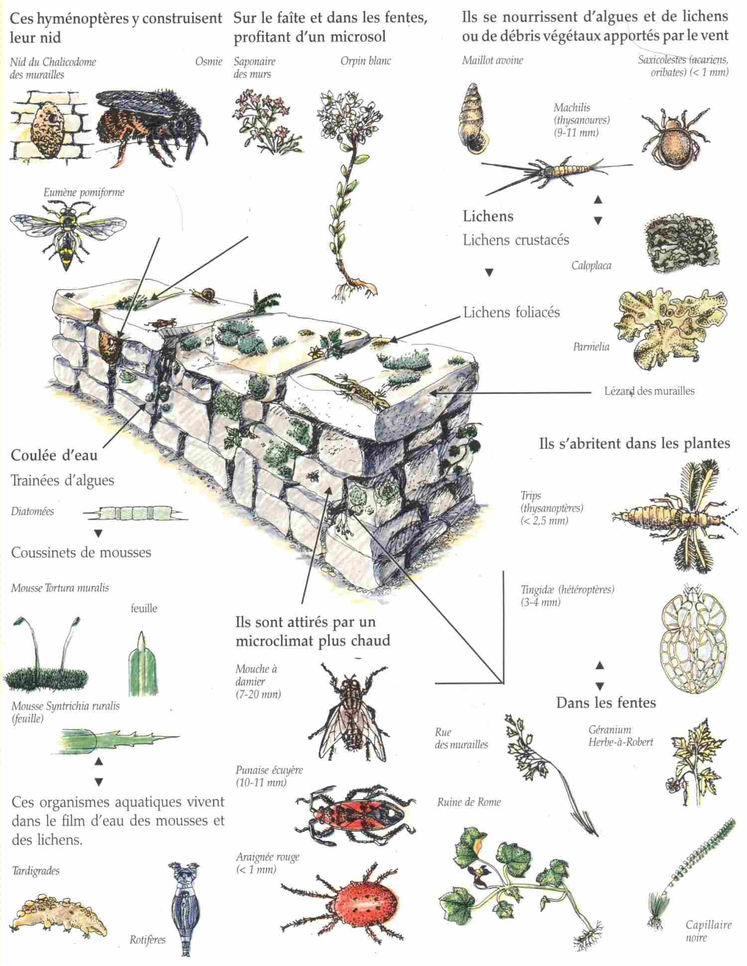 Climats et microclimats la maison d 39 alzaz ou le blog de l 39 cologie - D ou vient la moisissure sur les murs ...