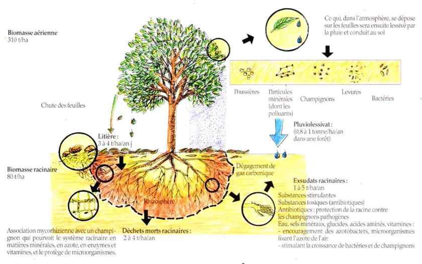 Les facteurs cologiques biotiques la maison d 39 alzaz ou le blog de l 39 cologie - Maison de l ecologie ...