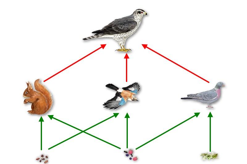 Les facteurs cologiques biotiques la maison d 39 alzaz ou - Maison de l ecologie ...