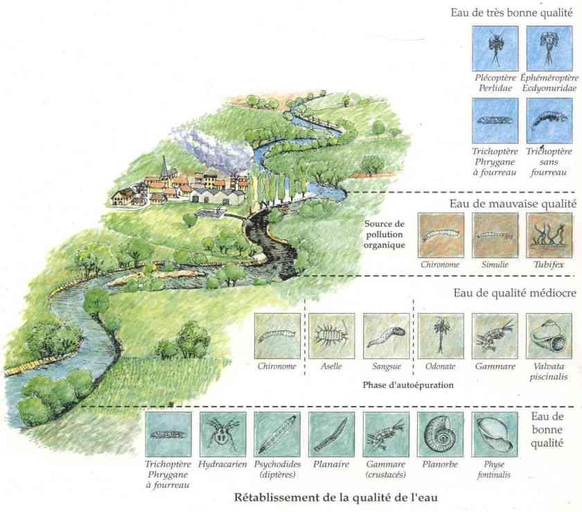 Les indicateurs biologiques la maison d 39 alzaz ou le blog de l 39 cologie - Maison de l ecologie ...