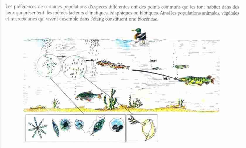 La population en cologie la maison d 39 alzaz ou le blog de l 39 cologie - Maison de l ecologie ...