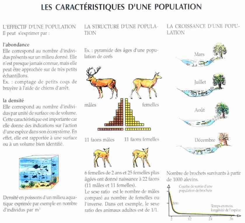 5 la dynamique des populations la maison d 39 alzaz ou le blog de l 39 cologie - Maison de l ecologie ...
