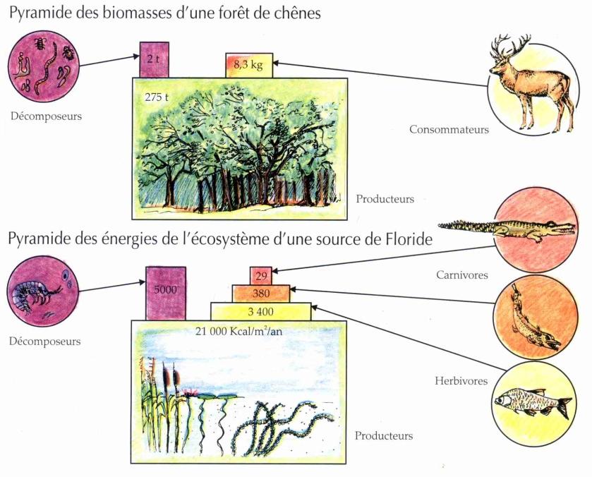 L cosyst me la maison d 39 alzaz ou le blog de l 39 cologie - Maison de l ecologie ...
