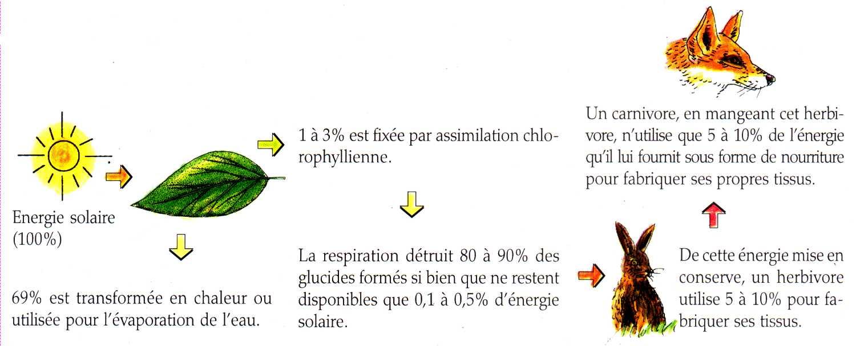 Productivité Et énergie Dans Lécosystème La Maison Dalzaz Ou Le