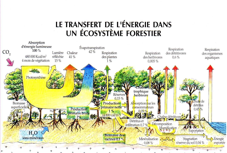 Bilan nerg tique la maison d 39 alzaz ou le blog de l 39 cologie - Maison de l ecologie ...