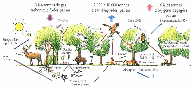 Oligotrophe la maison d 39 alzaz ou le blog de l 39 cologie - Maison de l ecologie ...