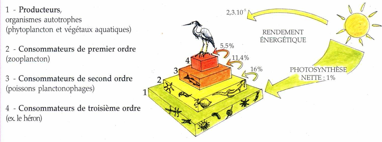pyramide des energie la maison d